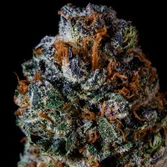 Purple Durango OG / Mr. Teddys