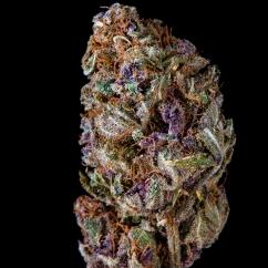 Purple Tangie / Nectar Boys